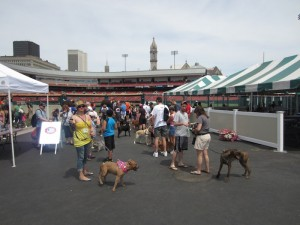 Review: Buffalo Bisons Dog Day in the Park 2012